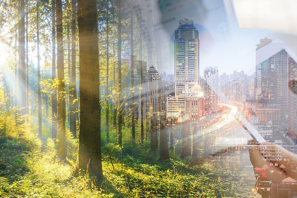 A merge of two photos. One showing a forrest and one showing a city.